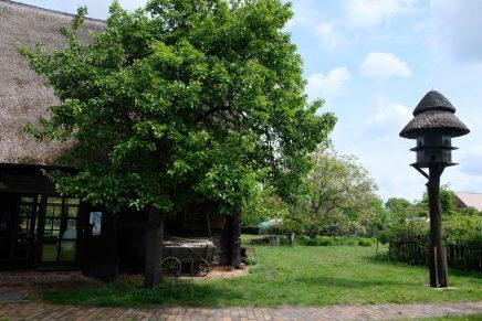 Lato z tradycją: Drewniana stodoła o ciekawej architekturze, zamieniona w muzeum kultury serbołużyckiej i regionalnej